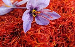 saffron_flower_3097101b