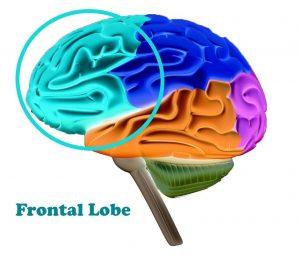 Frontal Lobe Sara Pugh Pilates