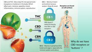 cannabis leeds sara