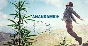 legal high natural cannabis